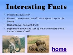Quotes Elephant Trade Information System Zoes Share Option Tehingud